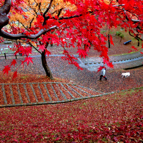 Top spots for Autumn Foliage!