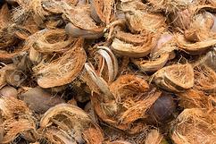 coconut-husks.webp