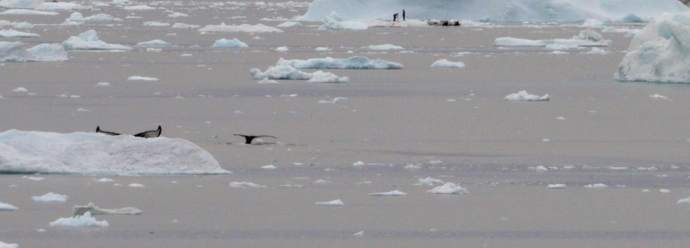 Ursula whales.jpg