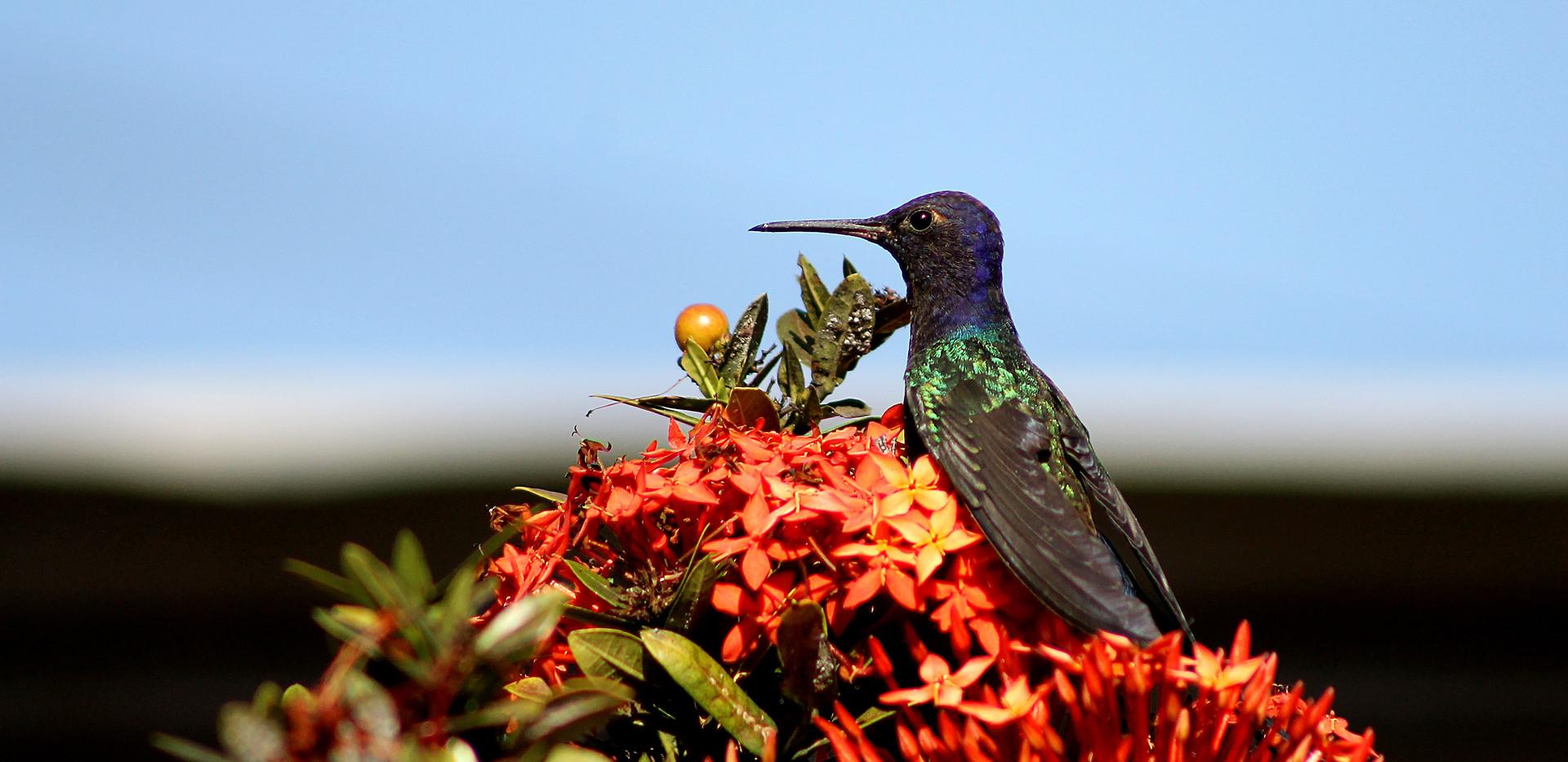 hummingbird-1937433.jpg