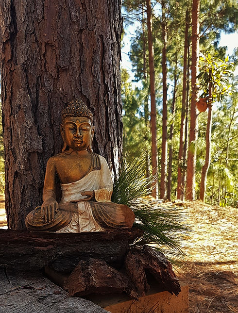 Discover your Buddha nature during your