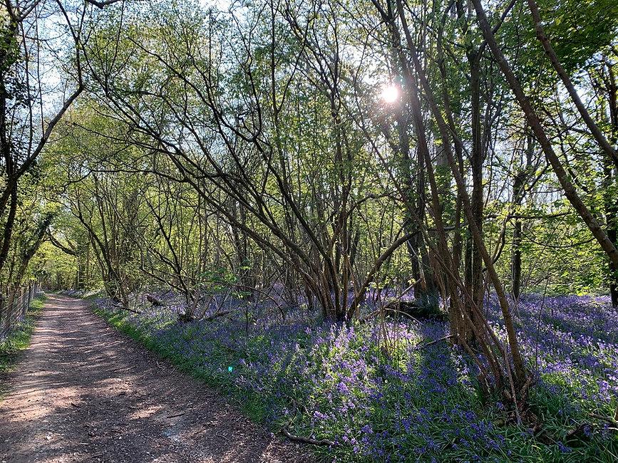 Walk - Clapham Wood - A1.jpg