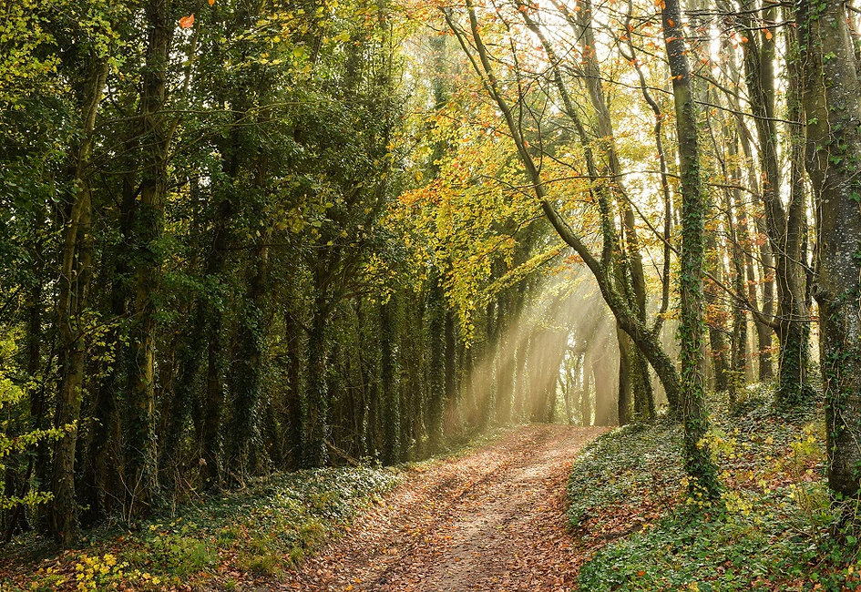 Walk - Houghton Forest - A1.jpg