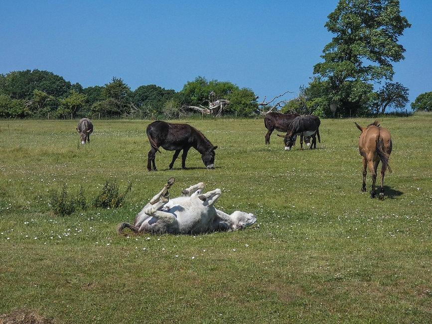 Walk - Woods & Donkeys - A1.jpg