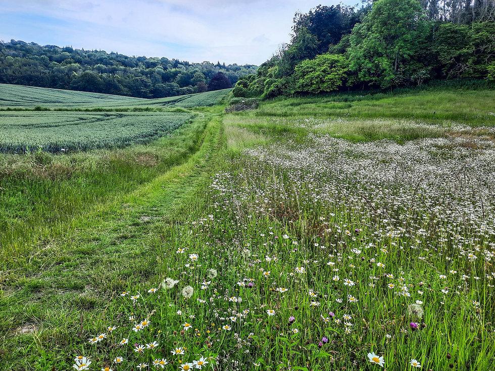 Walk - Madehurst Fields - A2.jpg