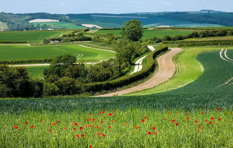 Walk - Kithurst Hill - A1.jpg