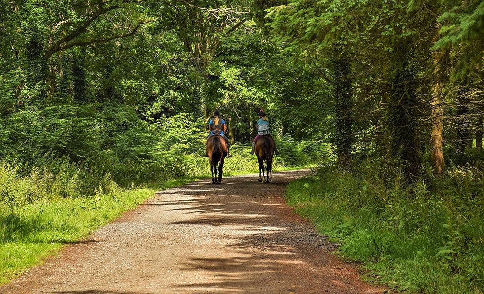 Walk - Wepham Wood - A1.jpg