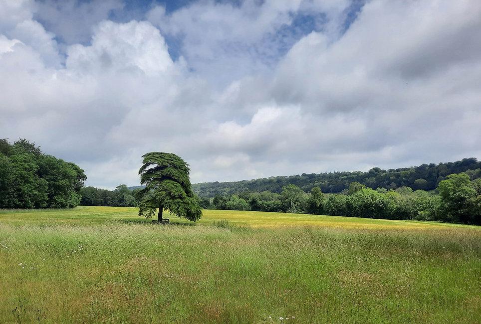 Walk - Madehurst Fields - A1.jpg