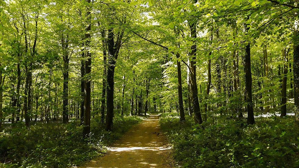 Walk - Woodland Wander - A1.jpg