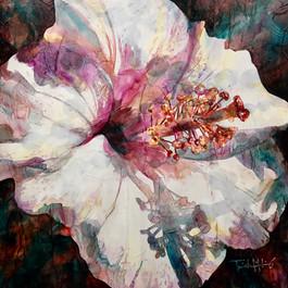 Shelley's Hibiscus