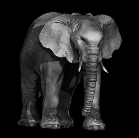 479_Anika_Elephant.jpg