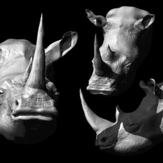 Donnie_RhinoPrint.jpg