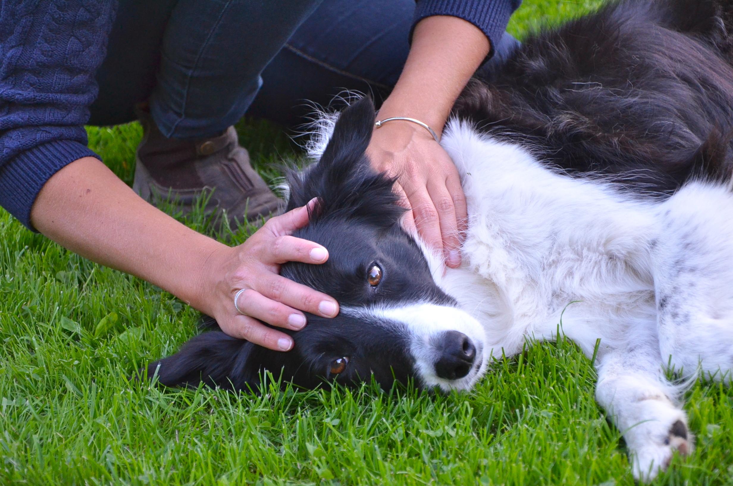 ostéopathe canin bayeux