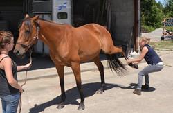 ostéopathe cheval orne