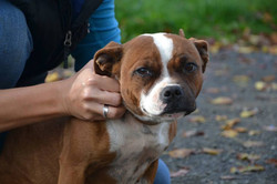 ostéopathe chien deauville