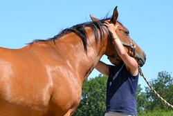 ostéopathe cheval lisieux