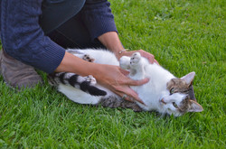 ostéopathe chat caen