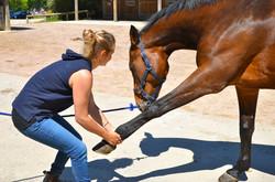 ostéopathe cheval manche