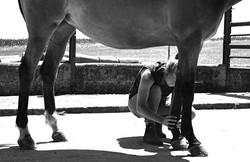 ostéopathe équin alençon