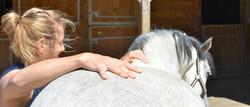 ostéopathe cheval saint lo