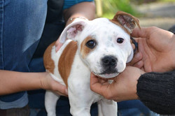osteopathe chien lisieux