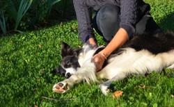 ostéopathe canin deauville