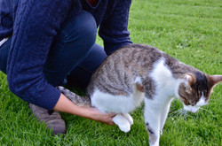 ostéopathe chat calvados