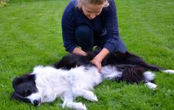 ostéopathe canin normandie