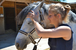ostéopathe cheval avranches