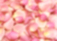 natural biodegradable confetti dried delphinium petal confetti dried rose petals