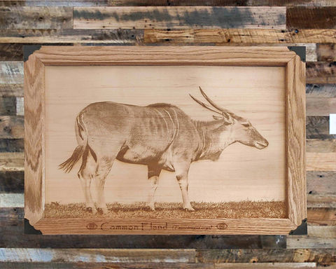 Common Eland on Wood Canvas