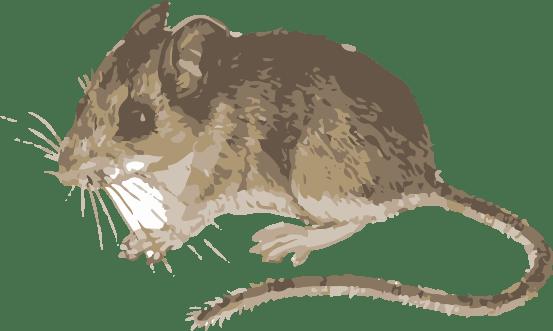 deet mouse