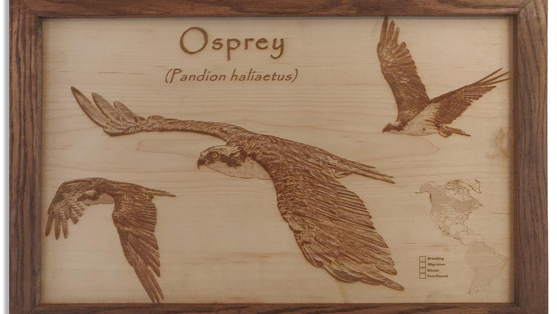 Ospray in flight.jpg
