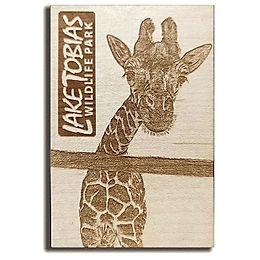 60 Giraffe looking