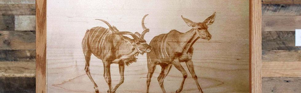 Kudu Running