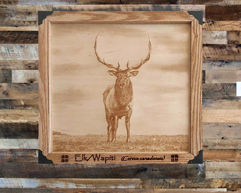Majestic Elk on Wood Canvas