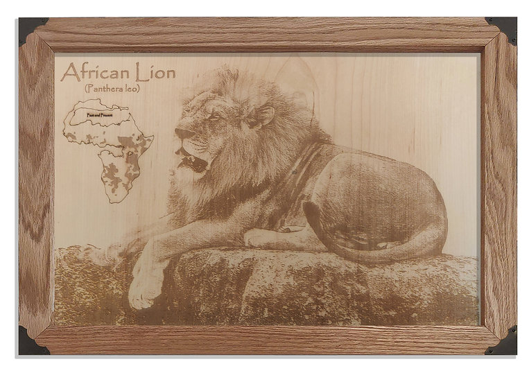 African Lion, Past and Present
