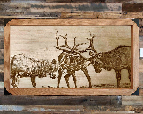 Three Elk Collide on Wood Canvas