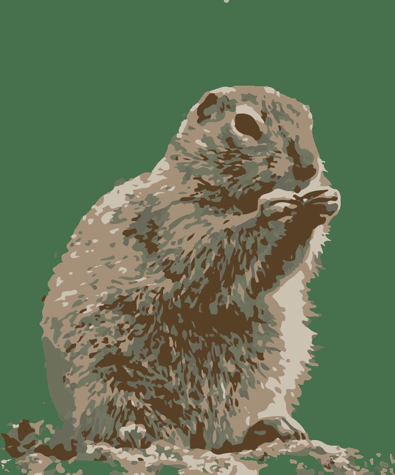 arctic ground squirel1