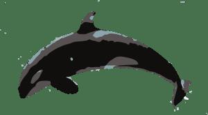 orca full
