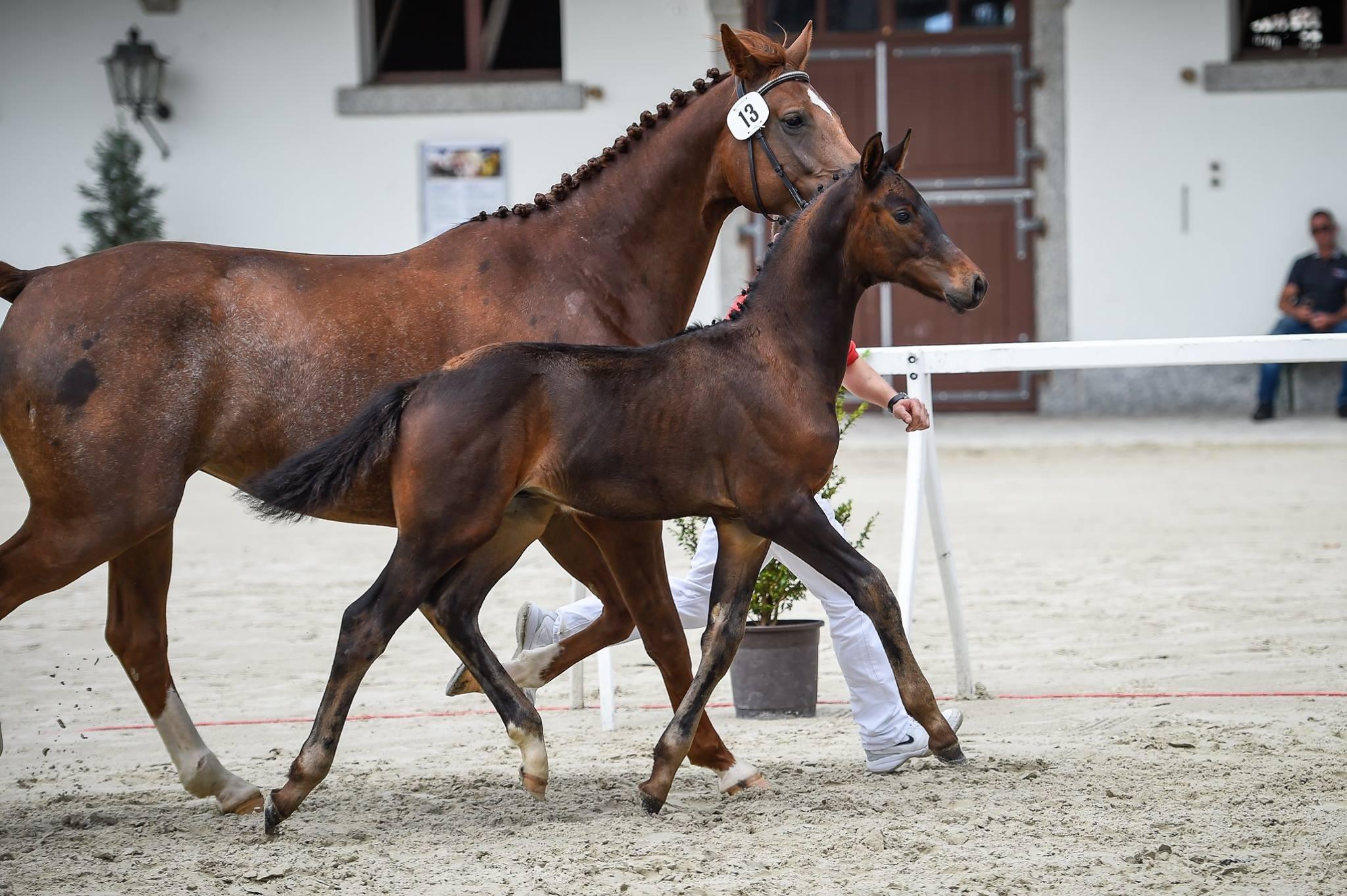 pferdeausbildung, Fohlenaufzucht