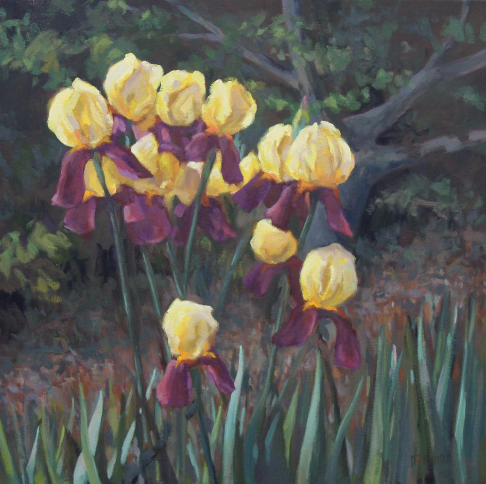 Sunlit Irises
