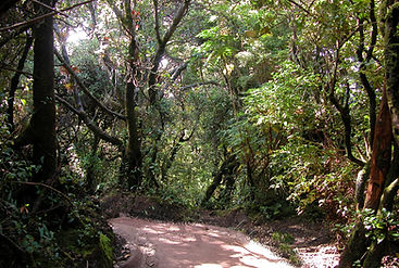 Guatemala Rainforest Trail.jpg