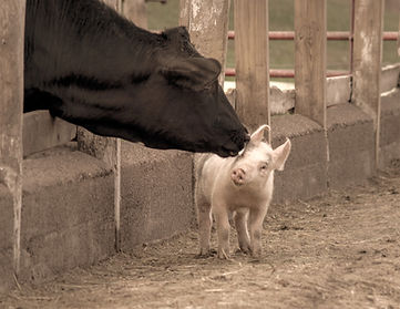Cow and Piglet_edited.jpg
