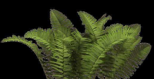 bush_PNG7214.png