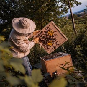 Imkfluencer: Fleißige Bienchen!
