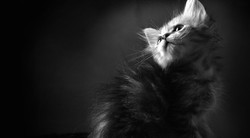 pics-of-black-and-white-cat-wallpaper