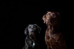 Animals___Dogs__040597_