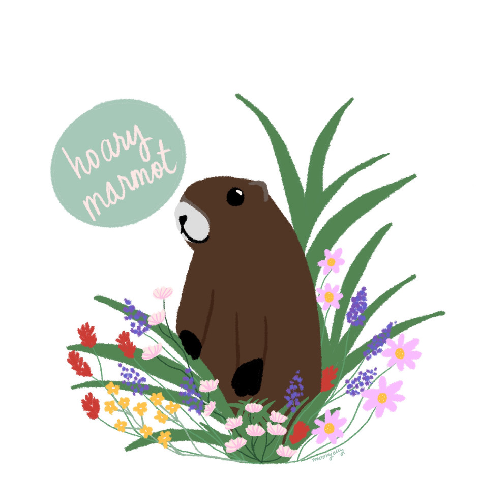 Marmot Country