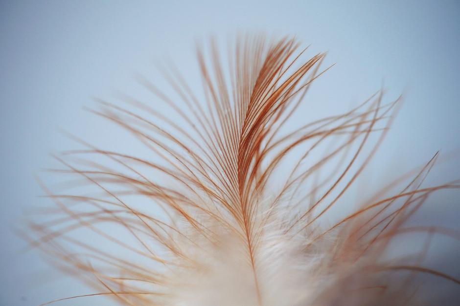 I Want My Eyebrows To Be So Fluffy & Feathery That I Fly Far, Far Awayyyy